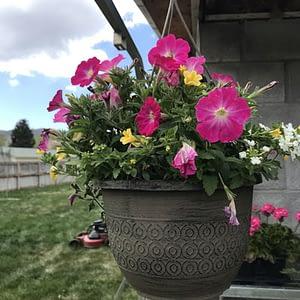 "Shop Pocatello Westwood Growers hanging baskets 10"""