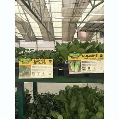 Spinach Seedlings at The Pocatello Greenhouse
