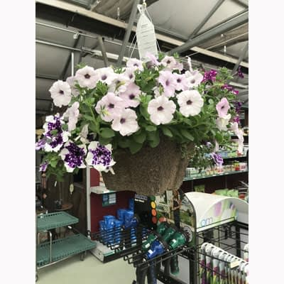 White/Purple Petunias Hanging Basket at The Pocatello Greenhouse