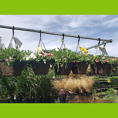 Shop Pocatello Westwood Growers hanging baskets 1