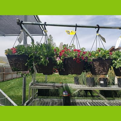 Shop Pocatello Westwood Growers Hangin baskets 2
