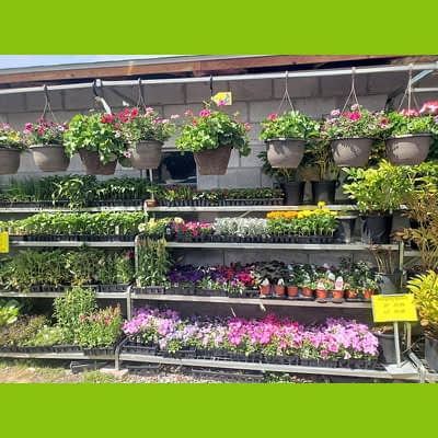 Hanging Baskets at Westwood Growers